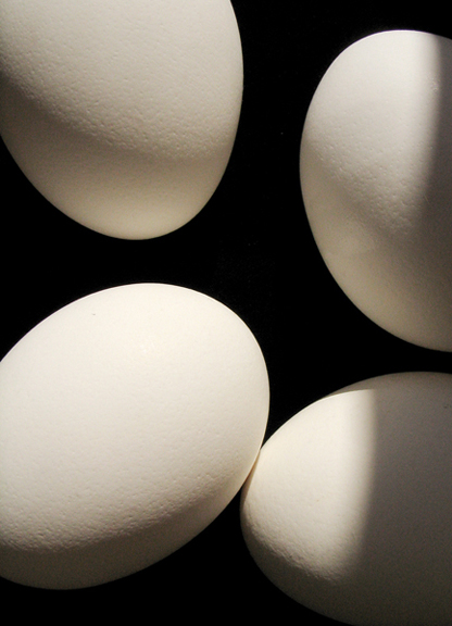 Egg Photography by Jenny Gummersall