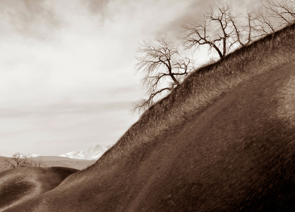 HorseScape Photography by Jenny Gummersall